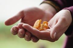 Funghi freschi del galletto in mani teenager femminili Fotografie Stock Libere da Diritti