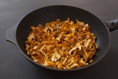 Funghi freschi del galletto in una ciotola Fotografia Stock Libera da Diritti