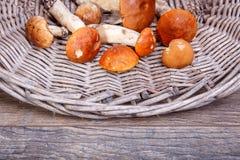 Funghi freschi selvaggi su una tavola di legno rustica Bolete arancione della betulla Copyspace Priorità bassa di autunno Fotografie Stock