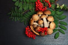 Funghi Ingredienti di alimento biologico immagini stock libere da diritti