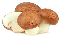 funghi isolati su priorità bassa bianca Immagini Stock