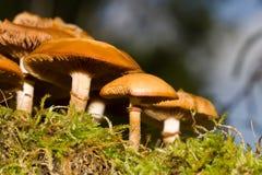 Funghi in legno su un albero mozzo Fotografia Stock