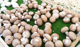 Funghi locali in un mercato di Parigi Immagini Stock Libere da Diritti