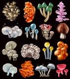 Funghi magici variopinti messi illustrazione di stock