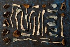 Funghi magici, vista superiore immagine stock