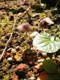 Funghi minuscoli Immagine Stock Libera da Diritti