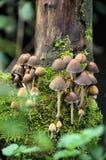 Funghi muscosi Fotografie Stock Libere da Diritti