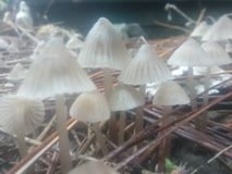 Funghi nebbiosi fotografie stock