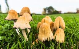 Funghi nel campo Fotografie Stock Libere da Diritti