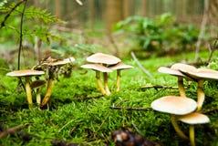 Funghi nel legno Immagine Stock