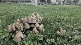 Funghi nel nostro giardino! fotografia stock libera da diritti