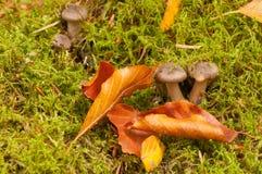 Funghi nel paesaggio di autunno Fotografia Stock Libera da Diritti