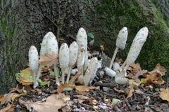 Funghi nel parco fotografie stock libere da diritti