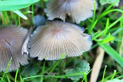 Funghi nell'erba Fotografie Stock