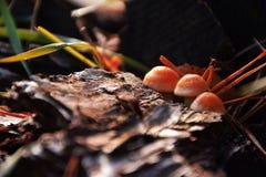 Funghi nella foresta Fotografia Stock