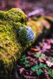 Funghi nella foresta del faggio immagini stock libere da diritti