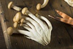 Funghi organici crudi del faggio di Brown Fotografia Stock Libera da Diritti