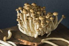 Funghi organici crudi del faggio di Brown Immagine Stock