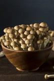 Funghi organici crudi del faggio di Brown Fotografie Stock Libere da Diritti