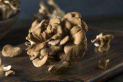 Funghi organici crudi di Maitake Fotografie Stock Libere da Diritti