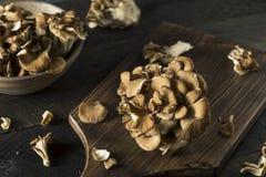 Funghi organici crudi di Maitake Fotografie Stock