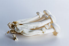 Funghi organici di Bunapi Fotografia Stock