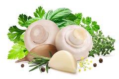 Funghi per la marinatura, erbe, aglio, percorsi immagine stock