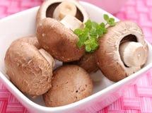 Funghi prataioli di Brown Immagine Stock