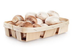 Funghi prataioli freschi del fungo Immagini Stock