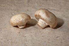 Funghi prataioli i Fotografia Stock Libera da Diritti