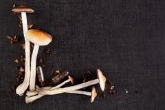 Funghi psichedelici con lo spazio della copia Immagini Stock Libere da Diritti