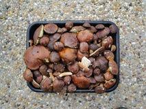 Funghi raccolti Immagini Stock Libere da Diritti