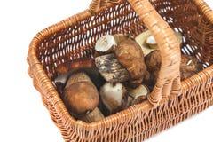 Funghi raccolti in un canestro di vimini Immagine Stock Libera da Diritti