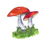 Funghi rosso-ricoperti disegnati a mano illustrazione vettoriale