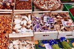 Funghi in San Sebastien Market Immagine Stock Libera da Diritti