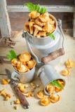 Funghi sani in una vecchia tazza di alluminio Fotografie Stock Libere da Diritti