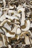 Funghi secchi Fotografia Stock