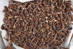 Funghi secchi Fotografie Stock