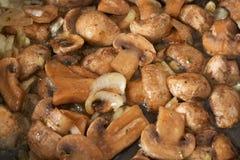 Funghi secchi con la cipolla fotografia stock
