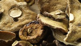 Funghi secchi su superficie di legno stock footage