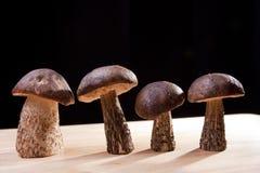 Funghi selvaggi Fotografie Stock Libere da Diritti
