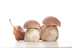 Funghi selvaggi Fotografie Stock