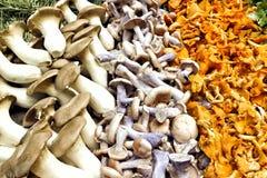 Funghi selvaggi della foresta variopinta fotografia stock