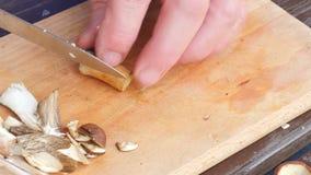 Funghi selvaggi freschi di taglio Chiuda sul colpo delle mani con i funghi di un taglio del coltello La mano dell'uomo ha tagliat video d archivio