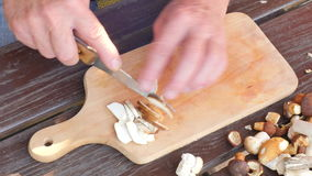 Funghi selvaggi freschi di taglio Chiuda sul colpo delle mani con i funghi di un taglio del coltello La mano dell'uomo ha tagliat stock footage
