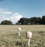 Funghi selvaggi su un campo da golf Fotografie Stock Libere da Diritti