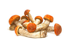 Funghi selvaggi su una priorità bassa bianca Immagini Stock