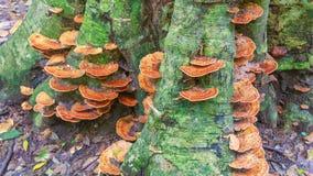 Funghi sotto l'albero Fotografia Stock Libera da Diritti