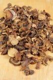 Funghi sparsi Fotografia Stock