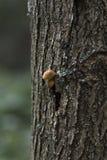 Funghi stupefacenti che crescono su un albero nel legno Fotografie Stock Libere da Diritti